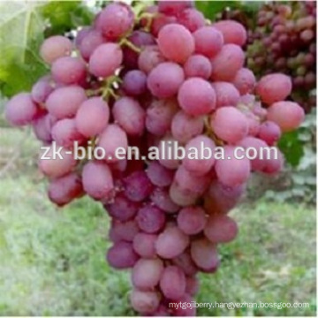 Natural Anti-Oxidant Grape Seed extract