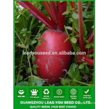 NR04 semilla de rábano rojo Piaolian semillas de vegetales chinos de China