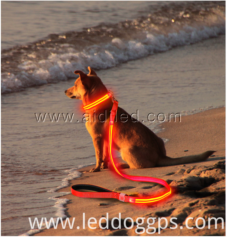 Best Led Dog Leash