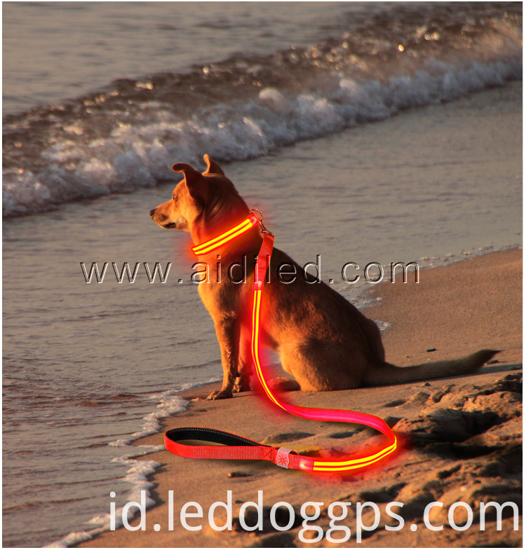 Glow Pet Leash