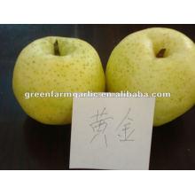 2012 new crop golden pear