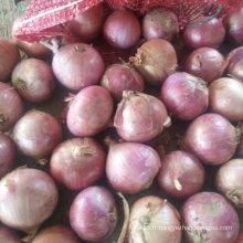 Export Qualité standard de l'oignon rouge frais 5-7cm