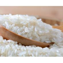 arroz redondo da grão curta de Vietnam / arroz japonica