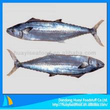 Gostoso fresco congelados espanhol mackerel peixe com melhor preço e servies