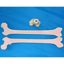Menschliches Skelett Femur Knochen Modell für medizinische Chirurgie Praxis (R010117)