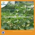 Plastic pe plant support climbing net