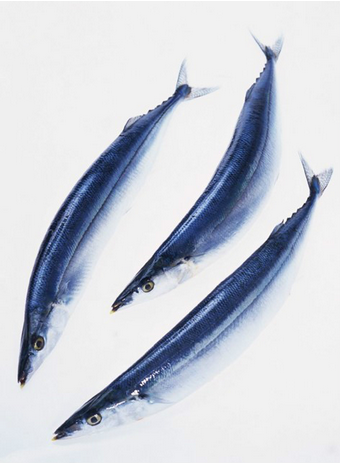Frozen Pacific Saury In Season