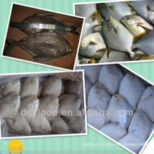 Congelado pomfret peixe todo rodada