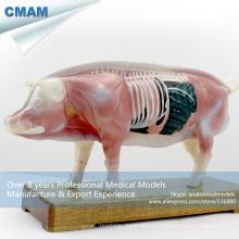 А07(12006) модели анатомические Пластиковые ветеринара свиньи иглоукалывание 12006