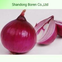Exportation d'oignons rouges / jaunes de haute qualité