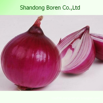 Exporting High Quality Red/Yellow Onion