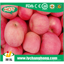 Best price for China red fresh Fuji Apples in bulk factory supplier