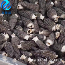 Wild dried morchella