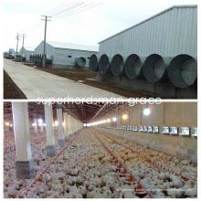 Estructura de acero Casa de pollo con equipo moderno de producción avícola