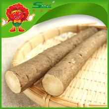 Légumes à racines et à la tige Bardane fraiche chinoise