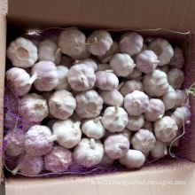 Fresh Purple Skin Garlic for Brazil Market