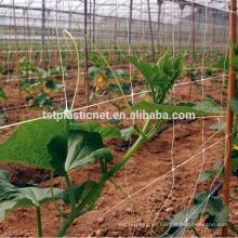 Soporte para planta trepadora enrejado neto red de arveja