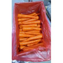 2016 свежей моркови на рынке Канады