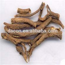 Corteza de la raíz de Acanthopanax