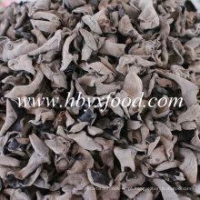 Orelha de madeira secada Black Fungus