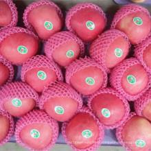 Pomme rouge FUJI de couleur rouge