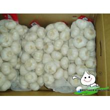 Garlic with GAP/Garlic from China/Low garlic price