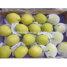 Shandong Birne / Niedrige Preis Birne / Shandong Birne aus China