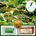 Herbal Supplements Lower Blood Pressure Uncaria Gambir Extract Powder