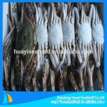Gefrorene neue Fischerei blaue Schwimmen Krabbe