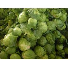 2013 fresh chinese cabbage