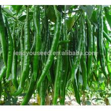 Р01 Gogokind нет.3 F1 гибрид длинной зеленой семена перца