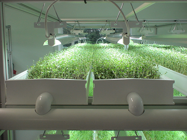 Sk Micro Rack For Microgreens