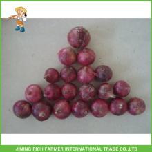 Bonne qualité Oignon rouge fraîche chinois