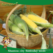 Suntoday international vegetables names vegetable F1 sweet mazie seed planter corn seeder plantting for sale(61001)