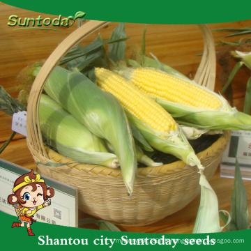 Suntoday international légumes noms légumes F1 mazie semoir de graines planteur de maïs semoir à vendre (61001)