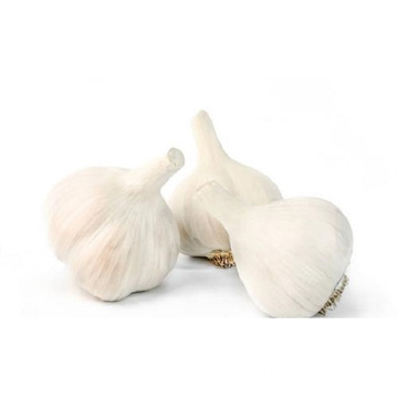 Best round garlic bag