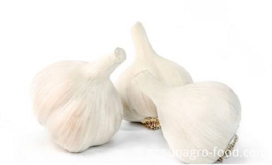 Pure White Fresh Garlic