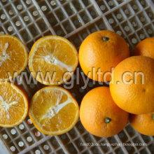 Chinesisch exportiert Standard frisch Valencia Orange