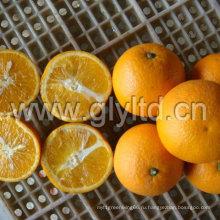 Китайский Ехпортированной Стандартной Свежий Валенсия Оранжевый