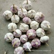 Gute Qualität Neuer Ernte Chinesischer frischer weißer Knoblauch