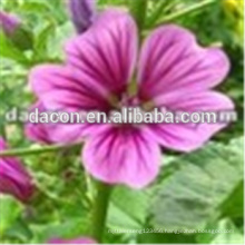 high Mallow Extract powder
