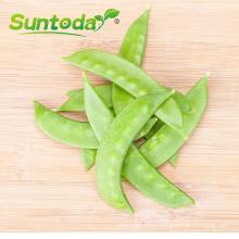 Green sweet  green pea seeds