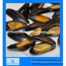 high quality fresh mussel