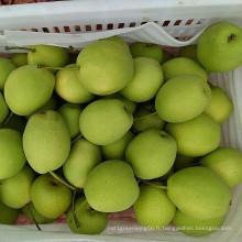 Qualité fraîche d'exportation chinoise de poire de Shandong de vert