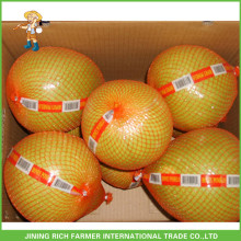 Chinese Fresh Honey Pomelo Supplier