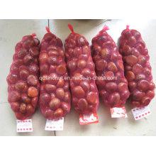 New Crop Chinês Castanhas Frescas