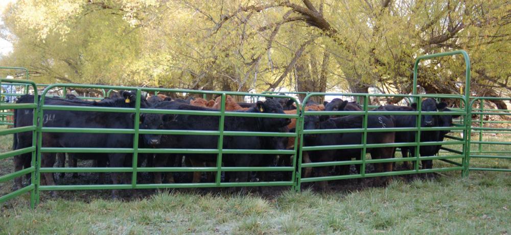 cheap+cattle+panels+for+sale