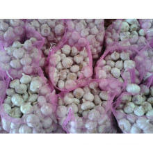 Fresh Normal White Garlic