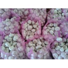 Alho Branco Alho Fresco Da China