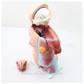 TUNK анатомии 12021 пластик 23 части 45см среднего размера двойного пола ПВХ человеческое тело органы анатомическую модель торса